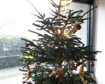 Der Weihnachtsbaum an der Dependance